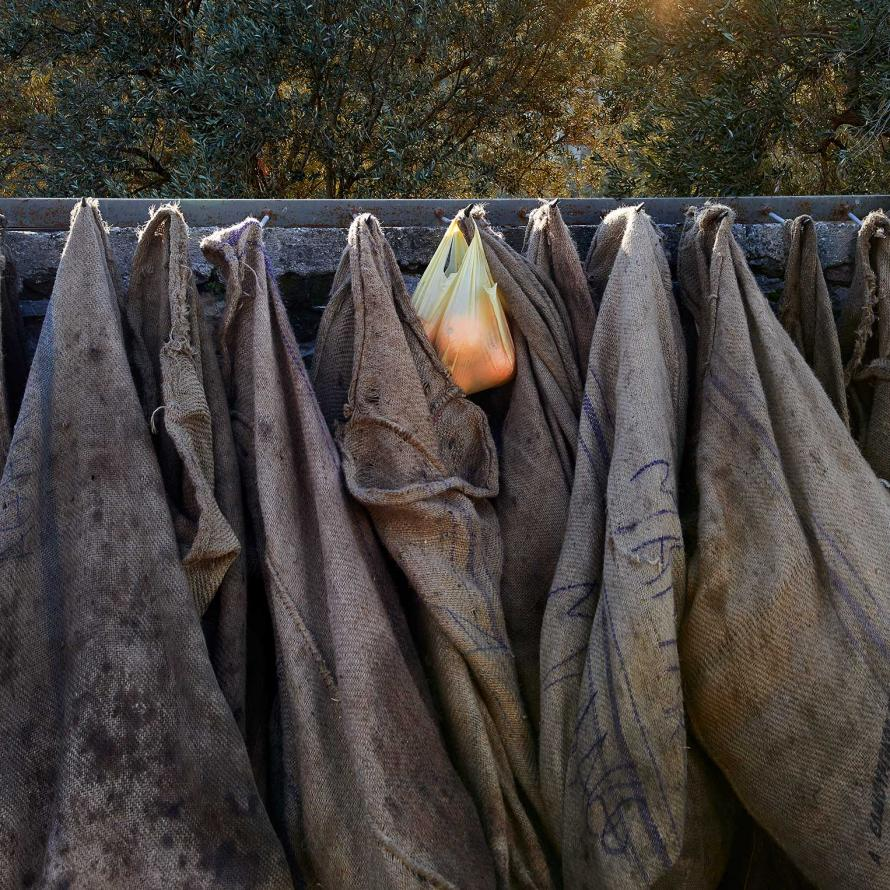 sacks for collecting olives